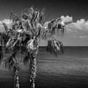 Palm Trees In Black And White At Laguna Beach Art Print