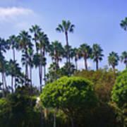 Palm Trees. My Beautiful California Art Print