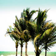 Palm Trees Ocean Breeze Art Print