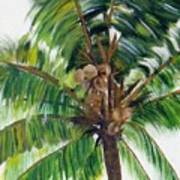Palma Tropical Art Print
