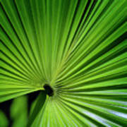Palmgreen Art Print by Al Hurley