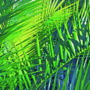 Palms 2 Art Print