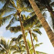 Palms Against Blue Sky Art Print