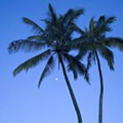 Palms And Blue Sky Art Print