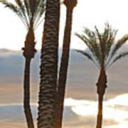 Palms And Light Art Print