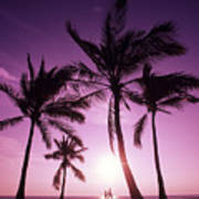 Palms And Pink Sunset Art Print