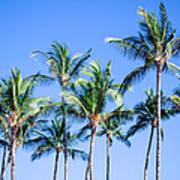 Palms In Living Harmony Art Print
