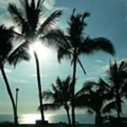 Palms In Silhouette Art Print