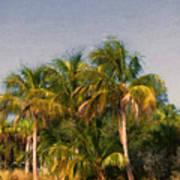 Palms - Naples Florida Art Print