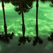 Palms Of Florida Art Print