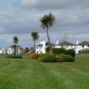 Palms Of Ireland Art Print