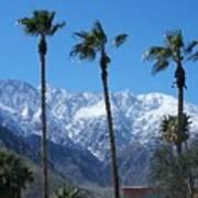 Palms With Snow Art Print