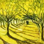 Palo Verde Pathway Art Print