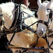 Palomino Horses Art Print