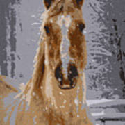 Palomino In The Snow Art Print