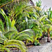 Panama Trees Art Print