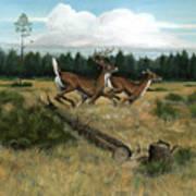 Panhandle Deer Art Print