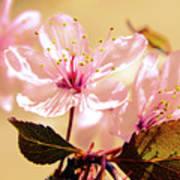 Panoplia Floral Art Print