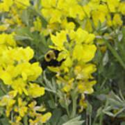 Panorama Hills Bluffs Bee Painting Art Print