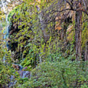 Panorama Of Gorman Falls At Colorado Bend State Park - Lampasas Texas Hill Country Art Print