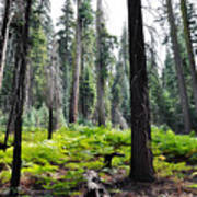 Panoramic Forest Art Print