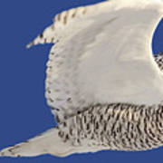 Panoramic Prairie Snowy Owl  Art Print