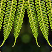 Panoramic Veil Of Ferns Art Print