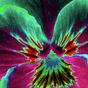 Pansy 01 - Photopower - Thoughts Of You Art Print