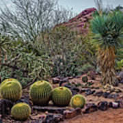 Papago And Barrels Art Print