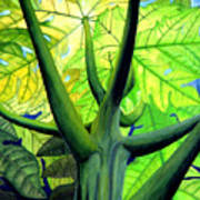 Papaya Tree Art Print