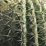 Paper Cactus Art Print