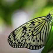 Paper Kite Butterfly- 2 Art Print