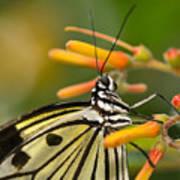 Paper Kite Butterfly With Orange Flower Art Print