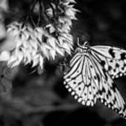 Paper Kite In Black And White Art Print