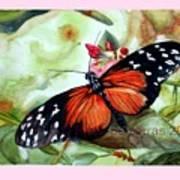 Papillon I Art Print