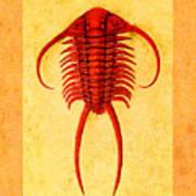 Paraceraurus Fossil Trilobite Art Print