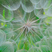 Parachutes For Seeds Art Print