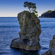 Paraggi Portofino Bay And The Tree On The Rock Art Print