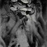 Parallel Botany #5175 Art Print