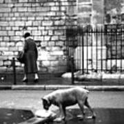 Paris Old Woman And Dog Art Print