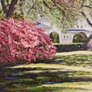 Park Spring Blossom With Shadows Art Print