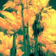 Parking Lot Palms 1 3 Art Print