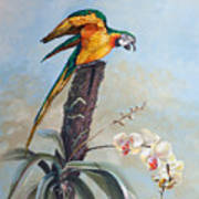 Parrot And Orchid Art Print