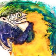 Parrot Ara Watercolor Painting Art Print