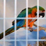 Parrot In A Cage Art Print