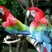 Parrot Partners Time To Make Up Art Print
