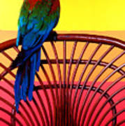 Parrot Sitting On Chair Art Print by Garry Gay
