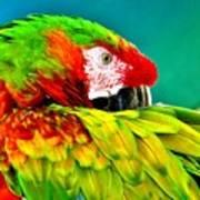 Parrot Time 2 Art Print