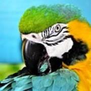 Parrot Time 3 Art Print