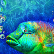 Parrotfish - Rainbow Spirit Art Print